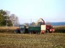 Bei der Maisernte im Oktober