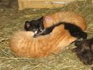 Große und kleine Katzen