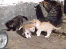 Katzenbabys toben in der Sonne