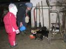 Frische Kuhmilch für die Kätzchen