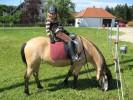 Das Glück der Erde liegt auf dem Rücken der Pferde...