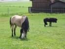 drei Ponys